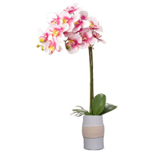 Orchidea w doniczce wys 75 cm