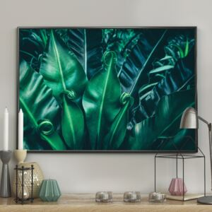DecoKing - Plakat ścienny – In Tropic 40x50 cm