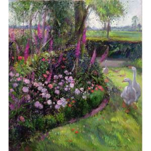 Timothy Easton - Reprodukcja Rose Bed and Geese 1992