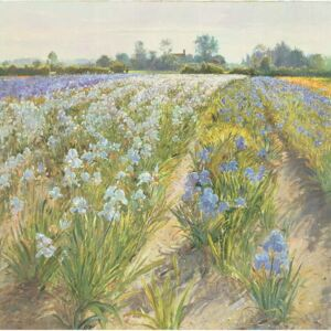 Timothy Easton - Reprodukcja Blue and White Irises Wortham