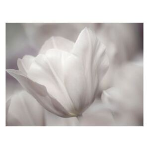 Fototapeta - Tulip - black and white photo