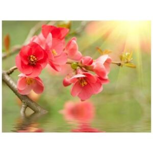 Fototapeta - Azalea reflected in the water