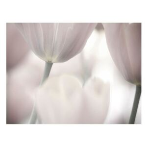 Fototapeta - Tulips fine art - black and white