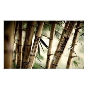 Fototapeta - Fog and bamboo forest