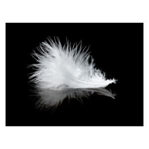 Fototapeta - White feather